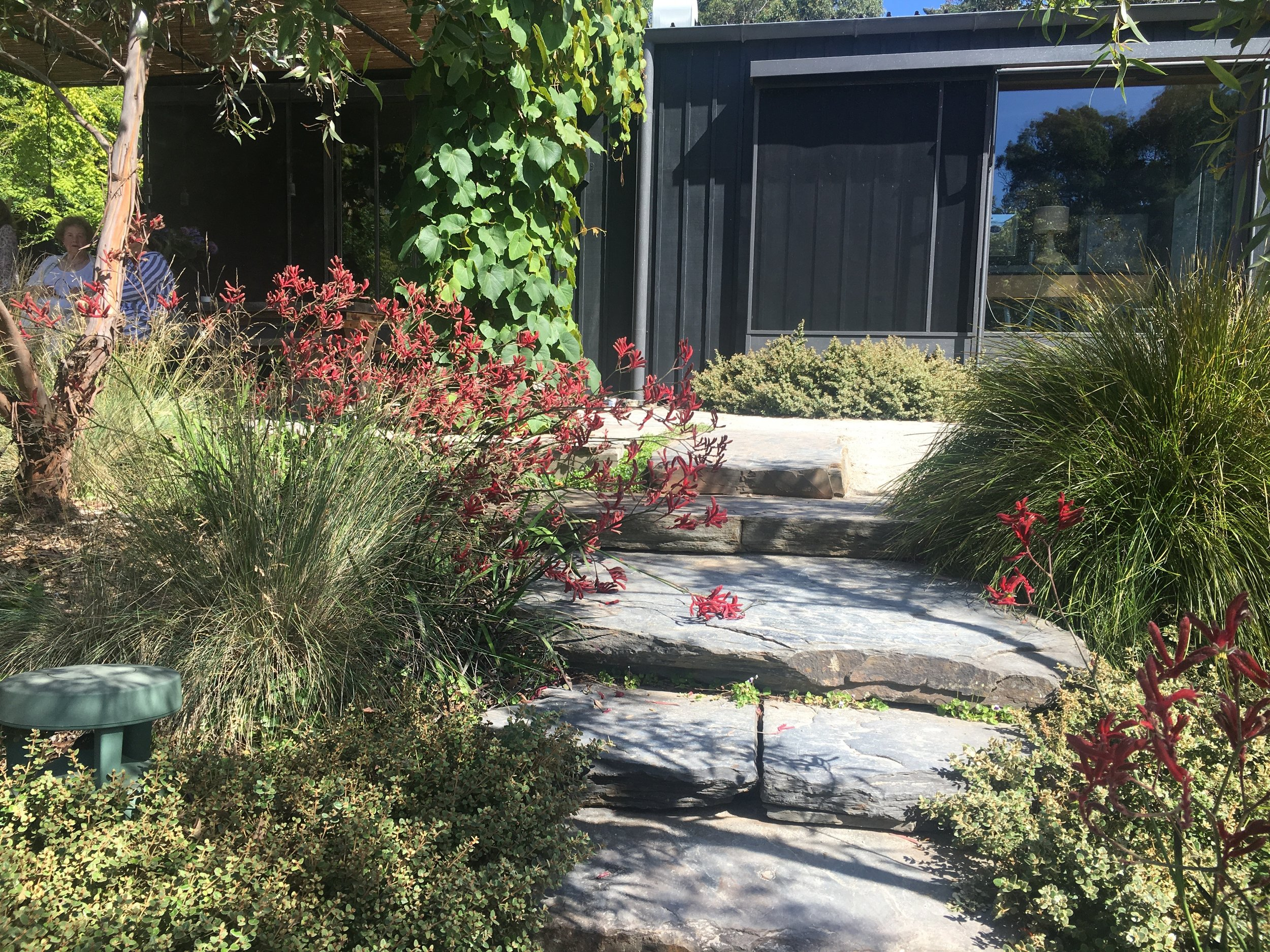 Main Ridge - Kangaroo paw and slate steps .jpg