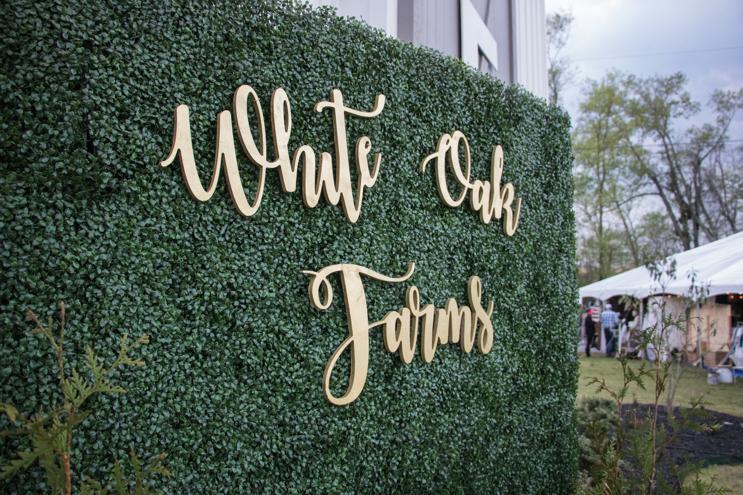 White Oak Farms Boxwood Wall-perfect for your entrance, behind your outside bar and as a photo backdrop!