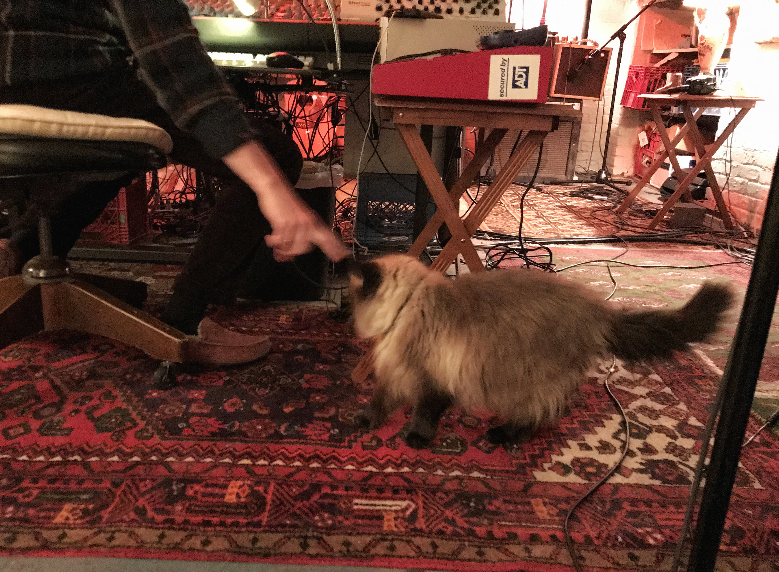 Malcolm & cat.jpg