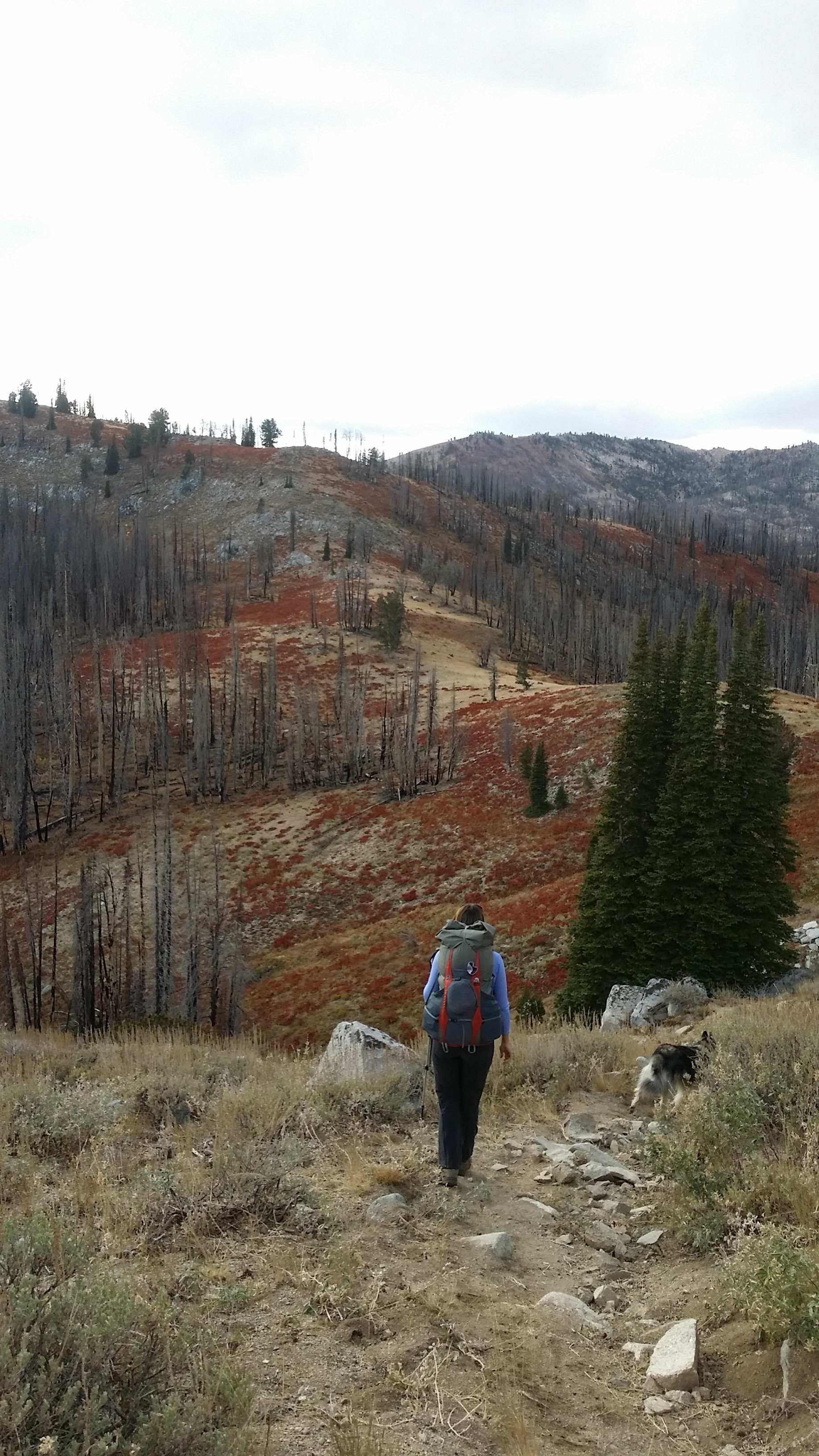 Tory makes her way toward the saddle.  The fall colors really brightened up the burned forest.