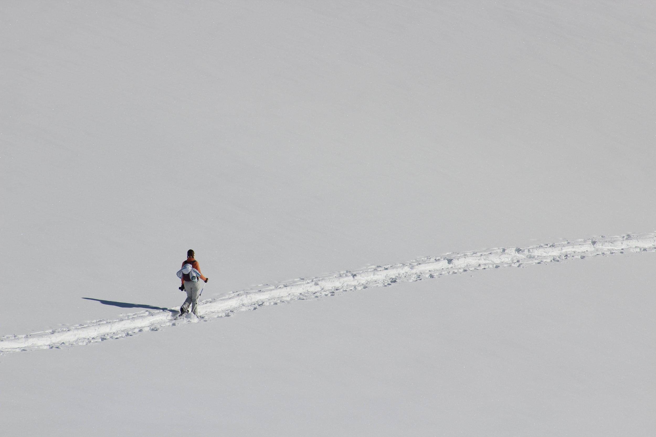 Tory crosses a snow field