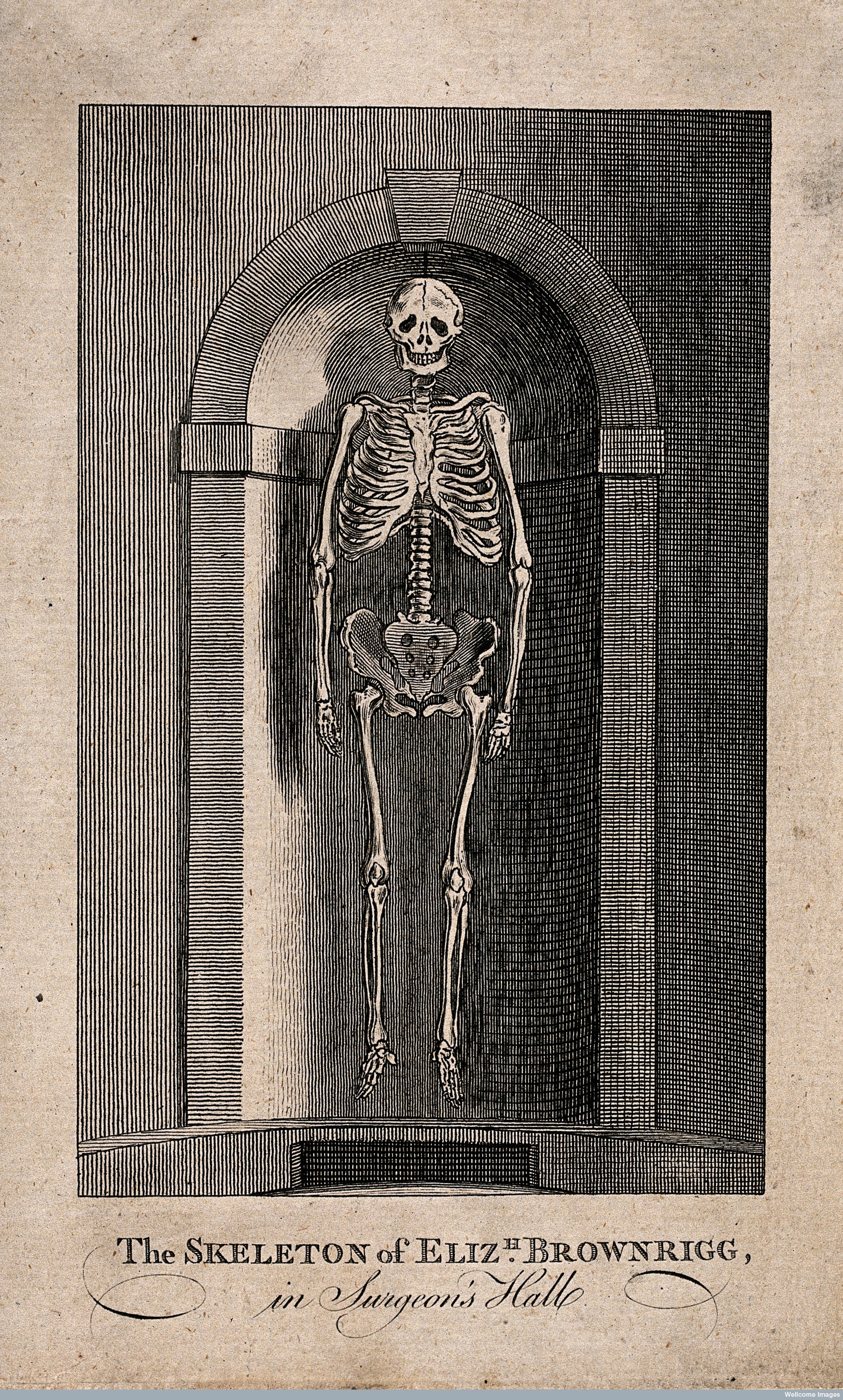 The skeleton of Elizabeth Brownrigg, displayed in a niche at the Royal College of Surgeons. Engraving.    Wellcome Images.  V0013496
