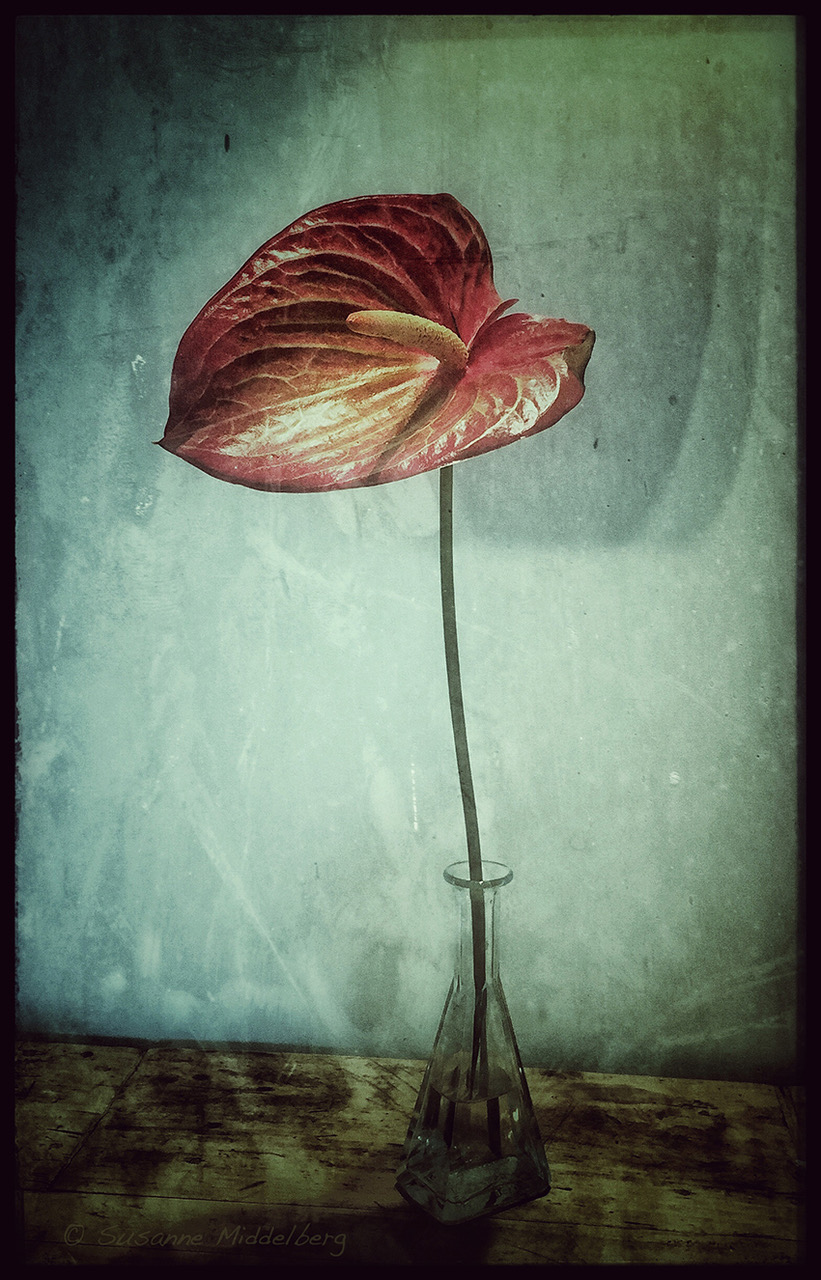 "from the series ""Flowers"""