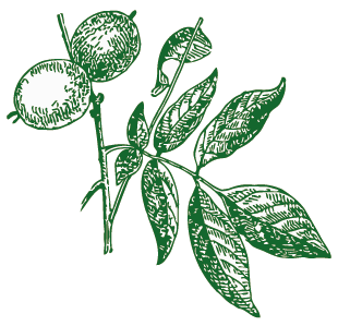 con foglie di noce crop.png