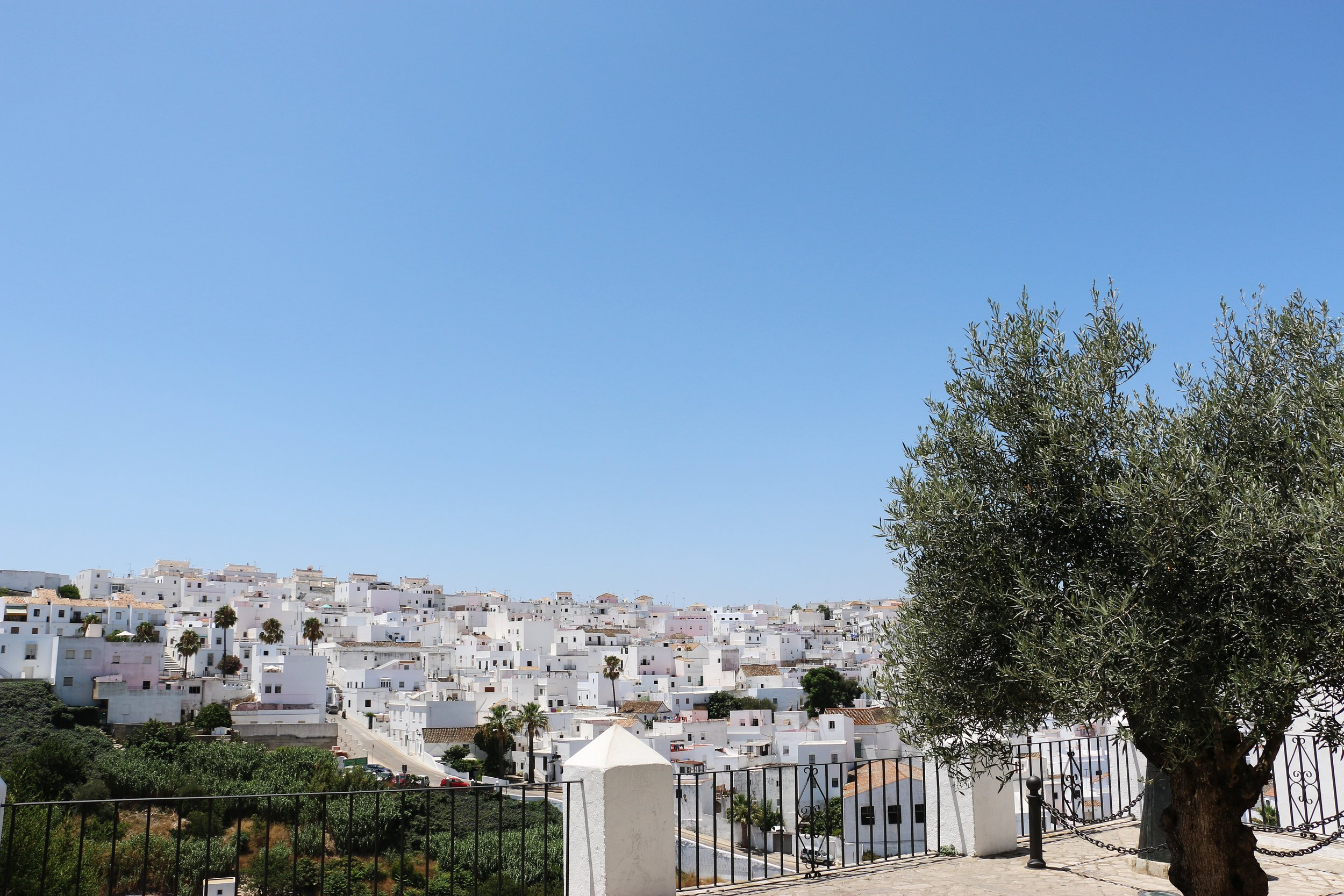 Olive trees are everywhere in the region