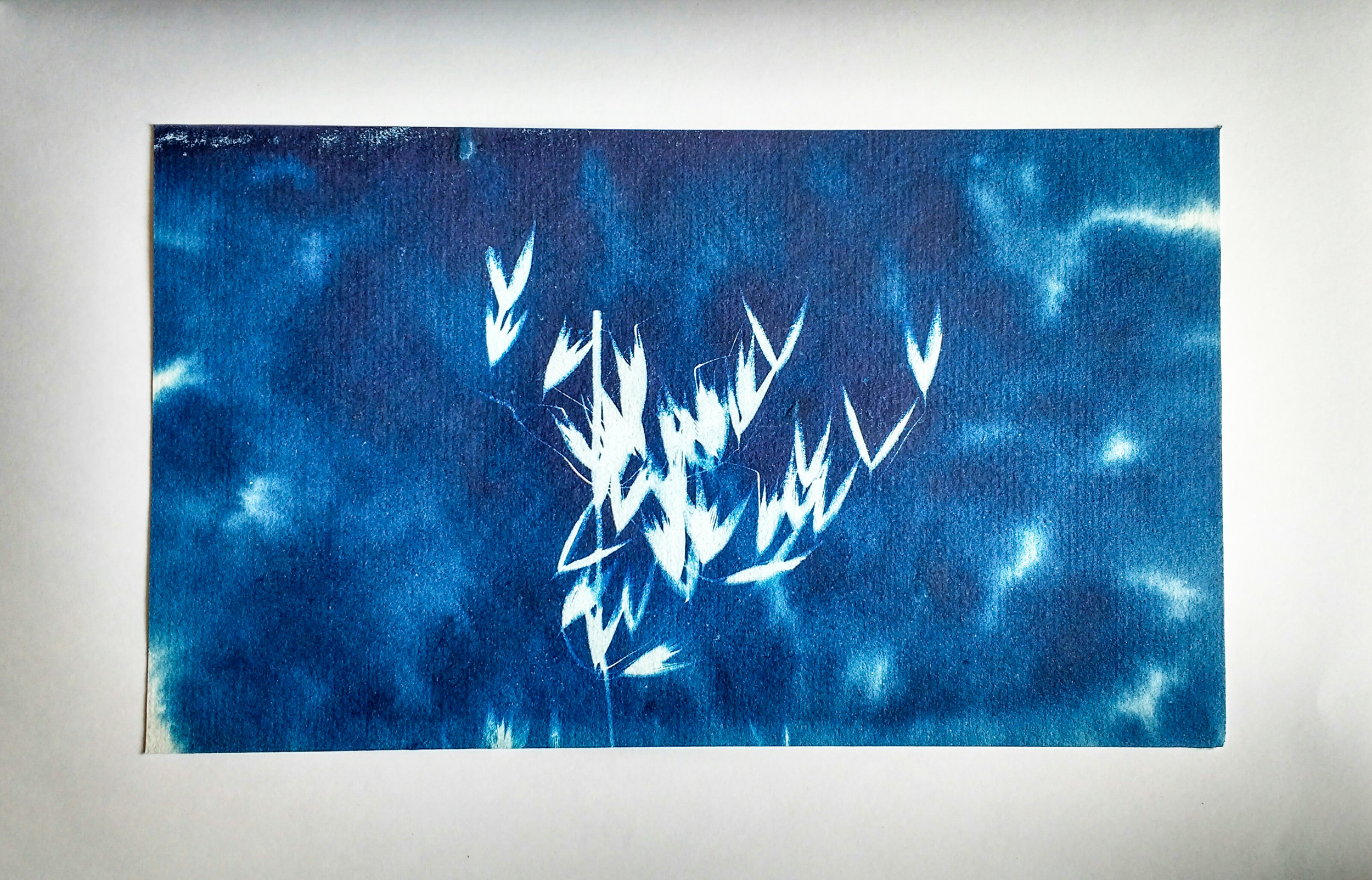 Cyanotype photogram made using a sponge instead of a regular brush