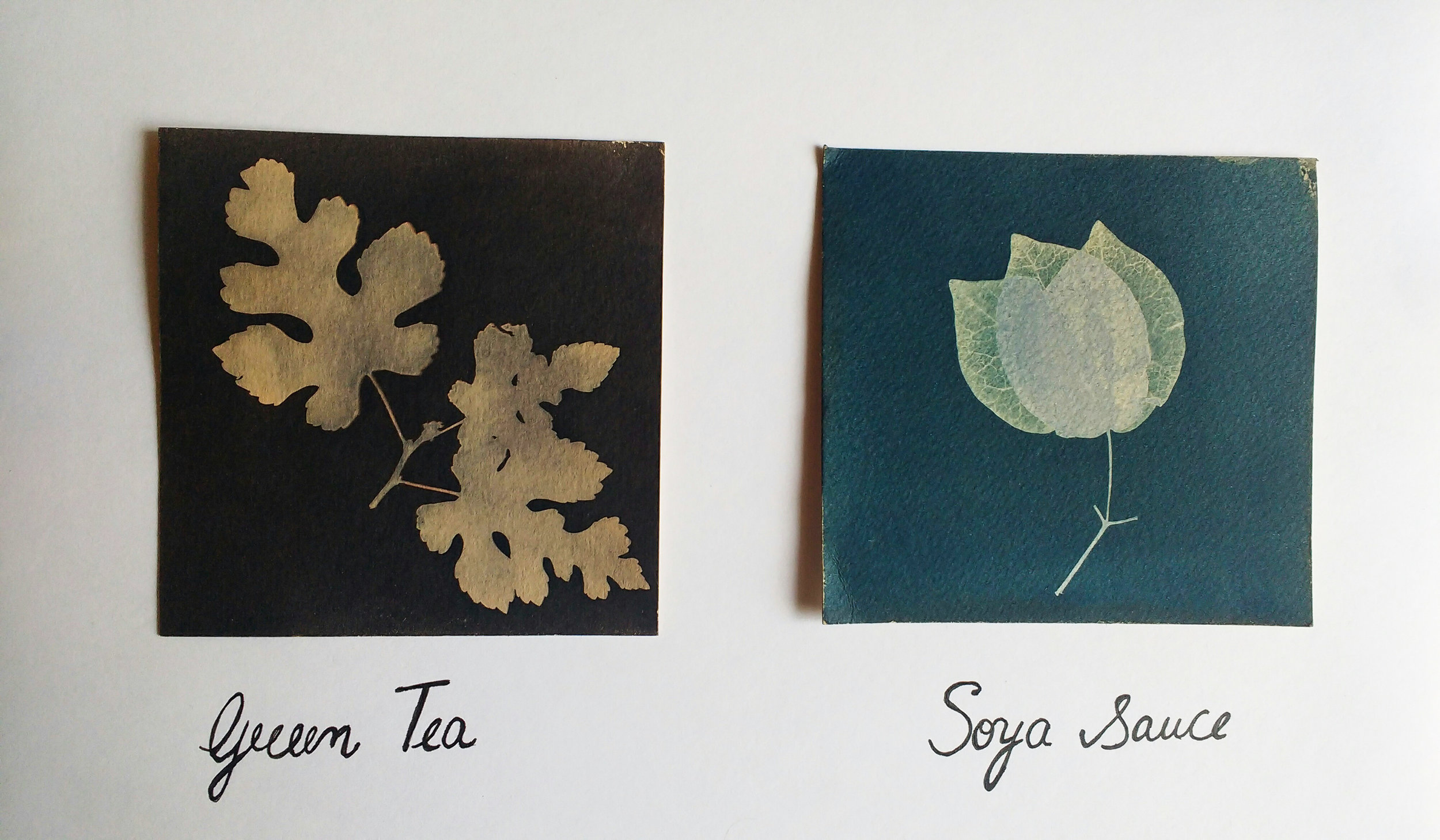 Cyanotype photograms using green tea and soy sauce