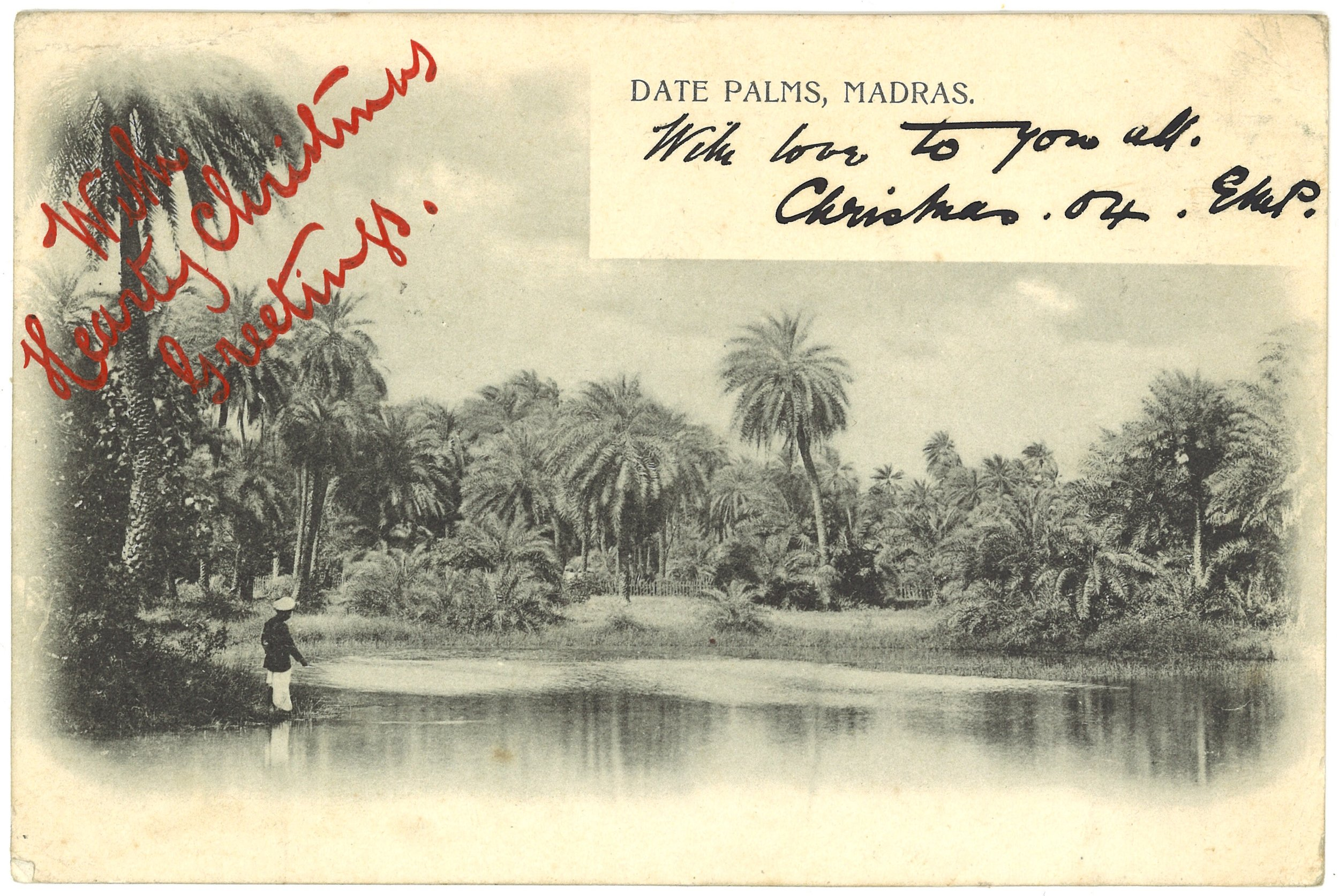 """Date Palms, Madras"". Publisher unknown. Posted on: 30.11.1904."