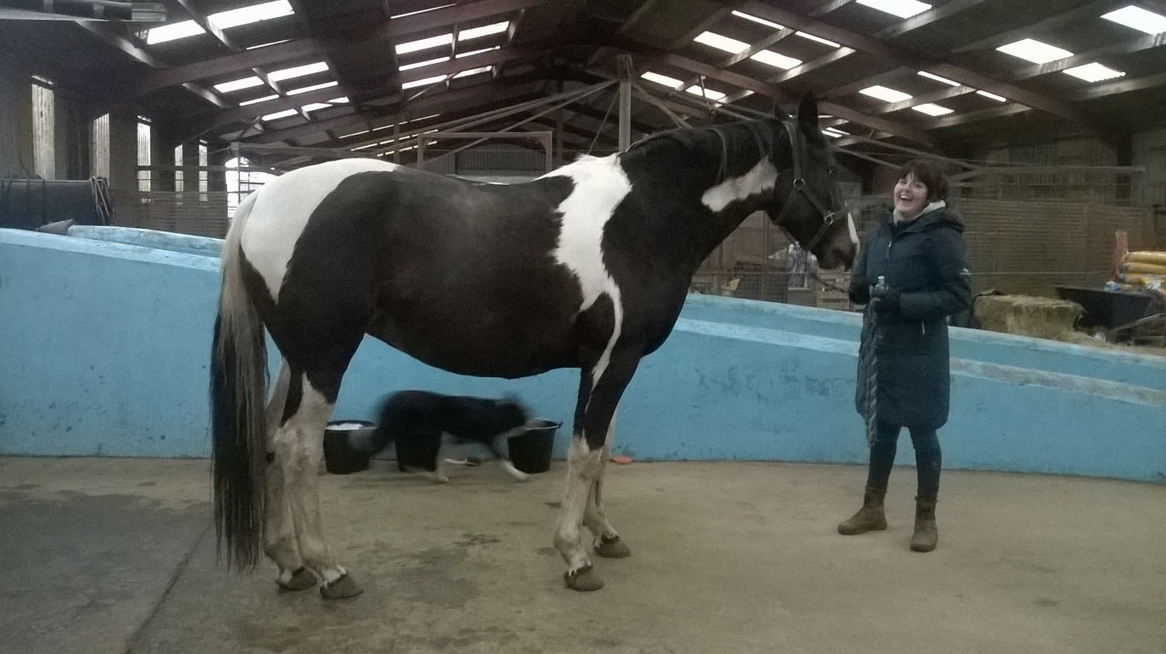 local competition/hunting horse: before