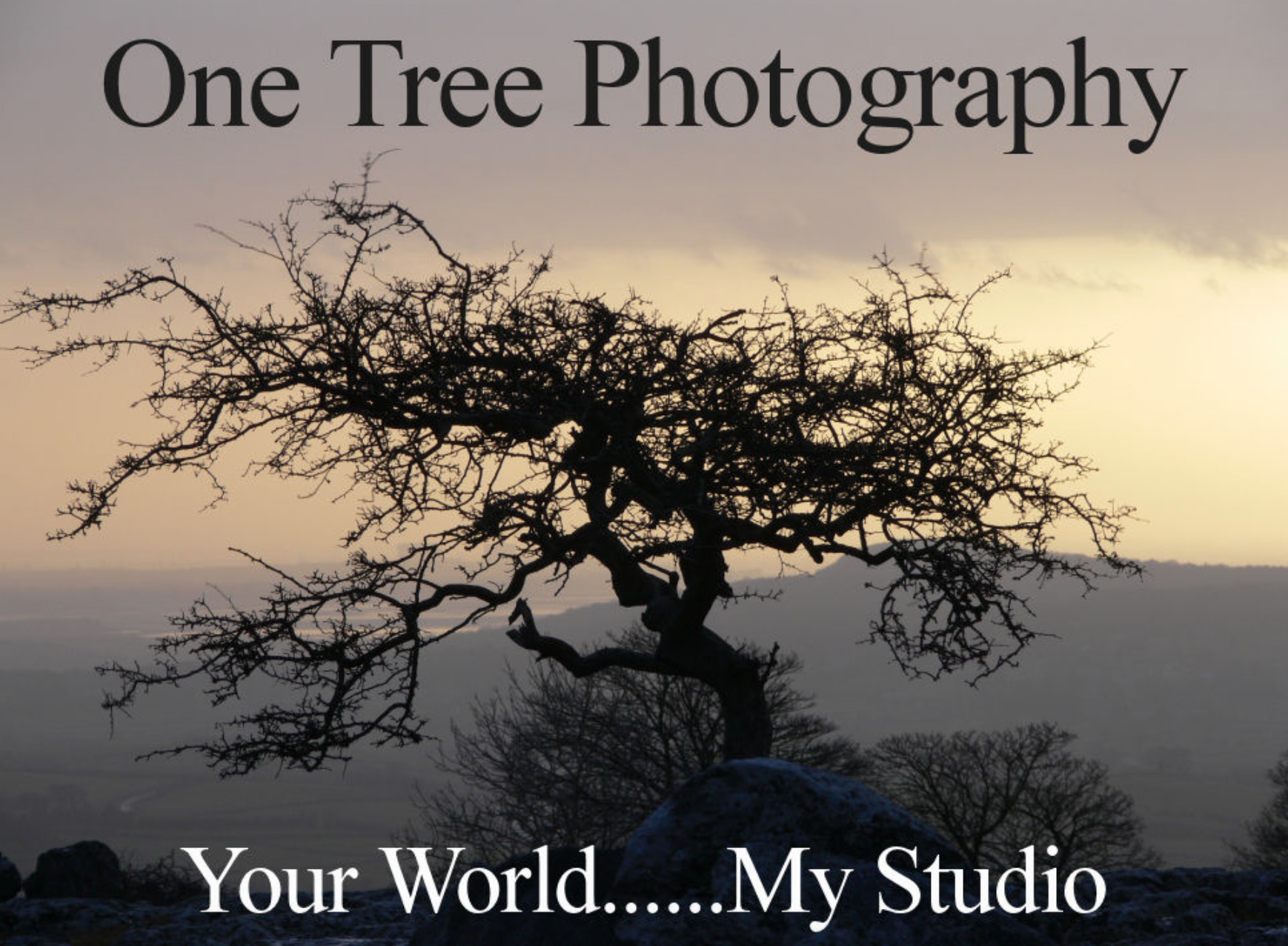 One Tree Photography