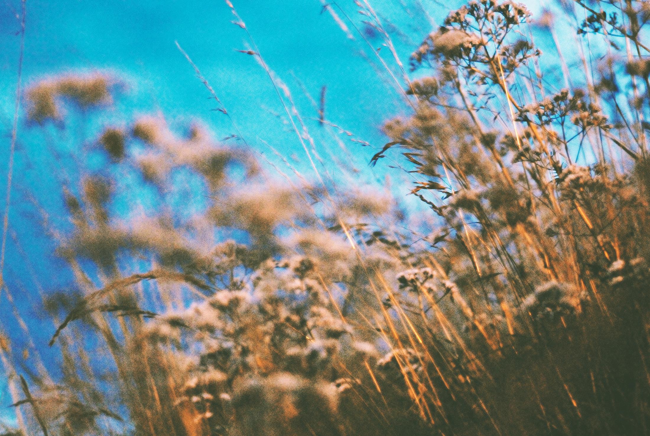 Maja_Malmcrona_photo_weed_1.jpg