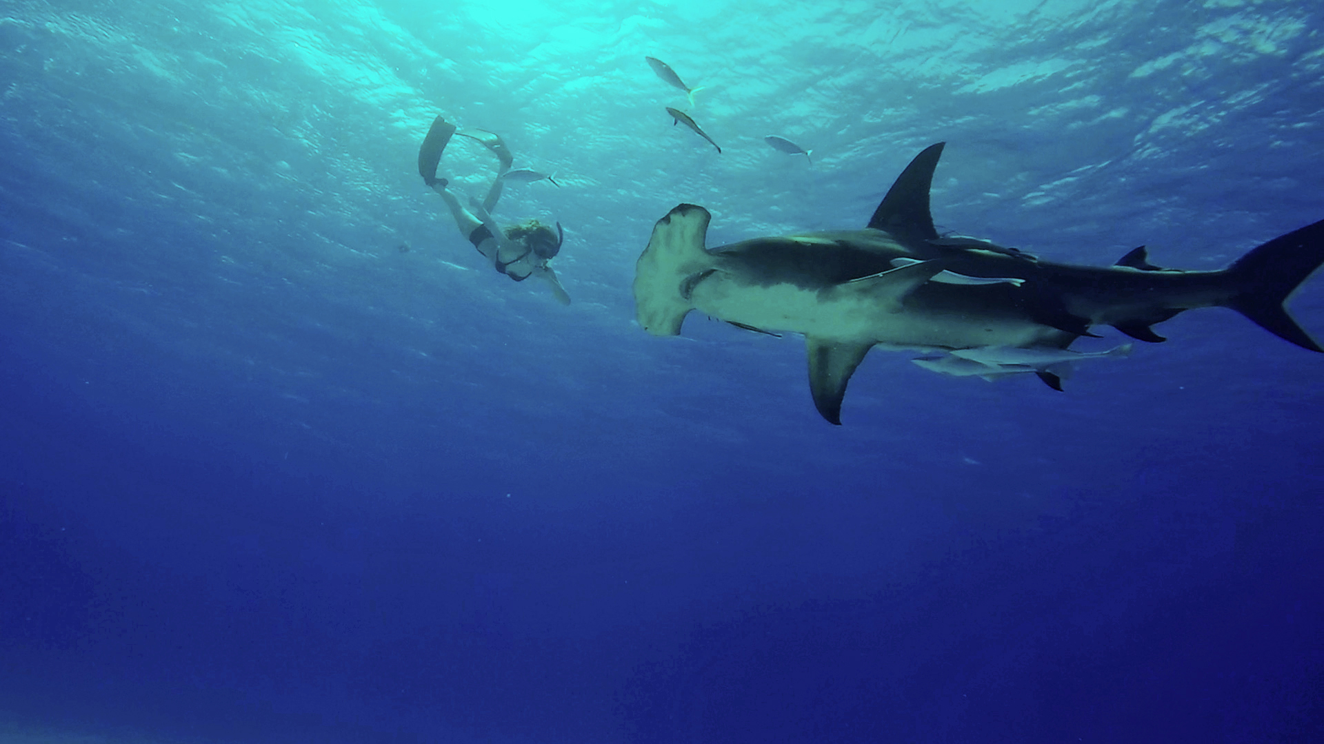 Julia and Great Hammerhead
