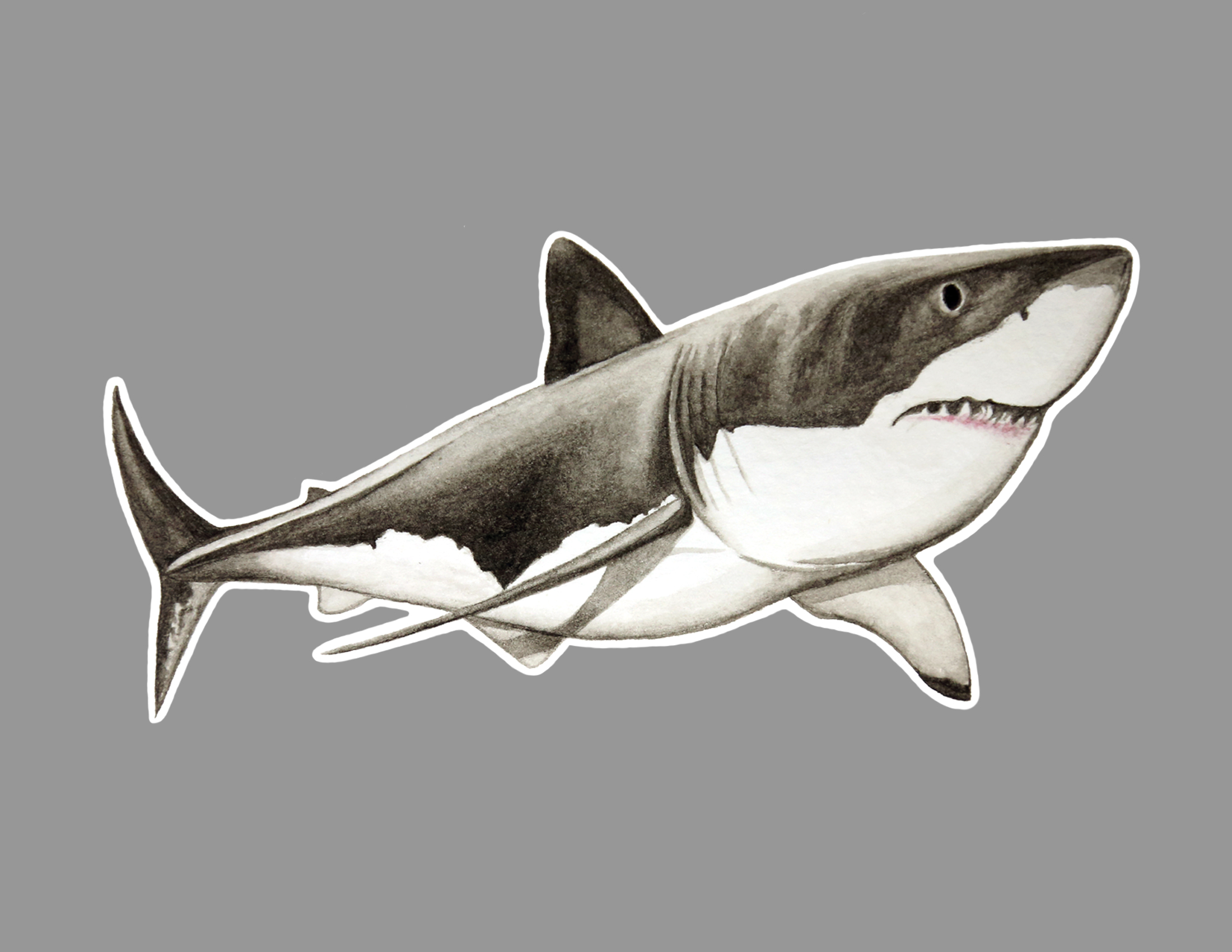 great white sticker.jpg