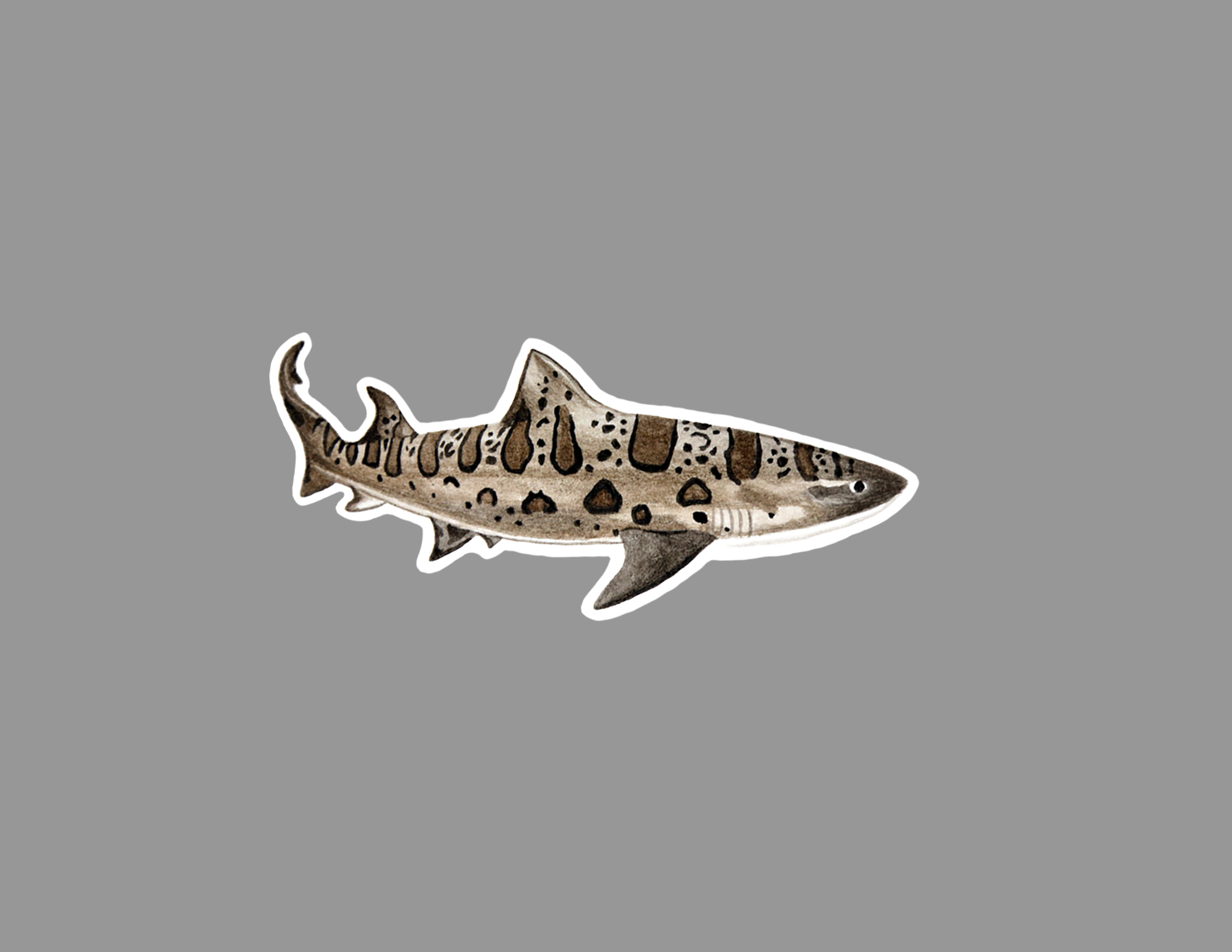 leopard shark sticker.jpg