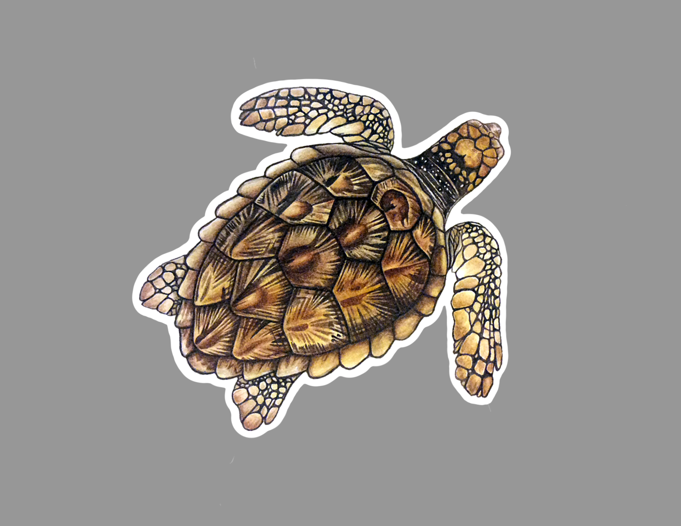 turtle sticker.jpg