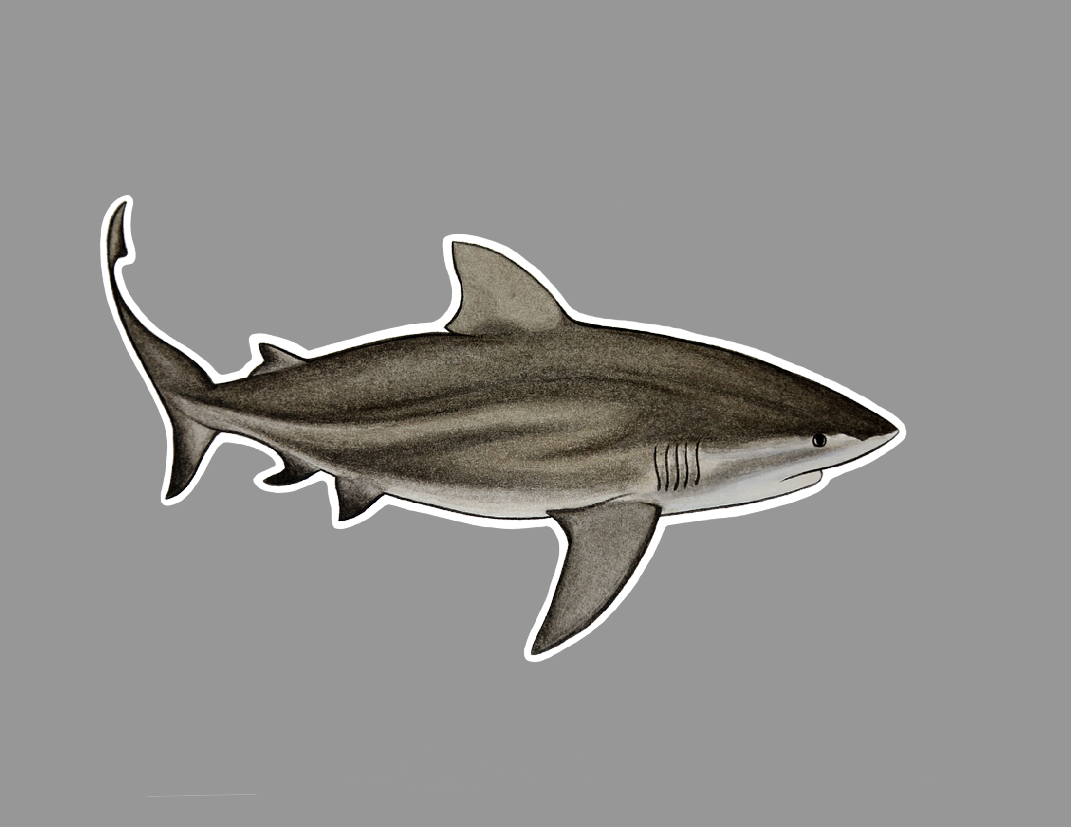 bull shark sticker.jpg