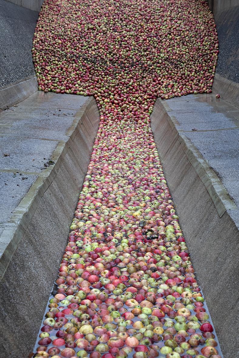 appelen lossen bij Trudo