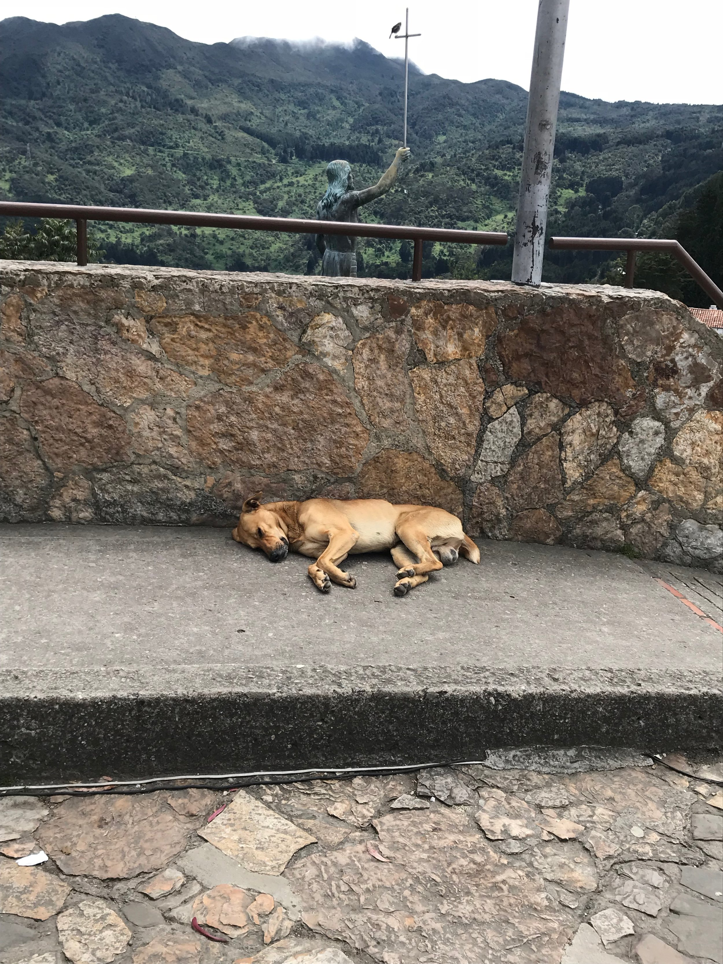 Dog relaxing at the top of Monserrate Hill.