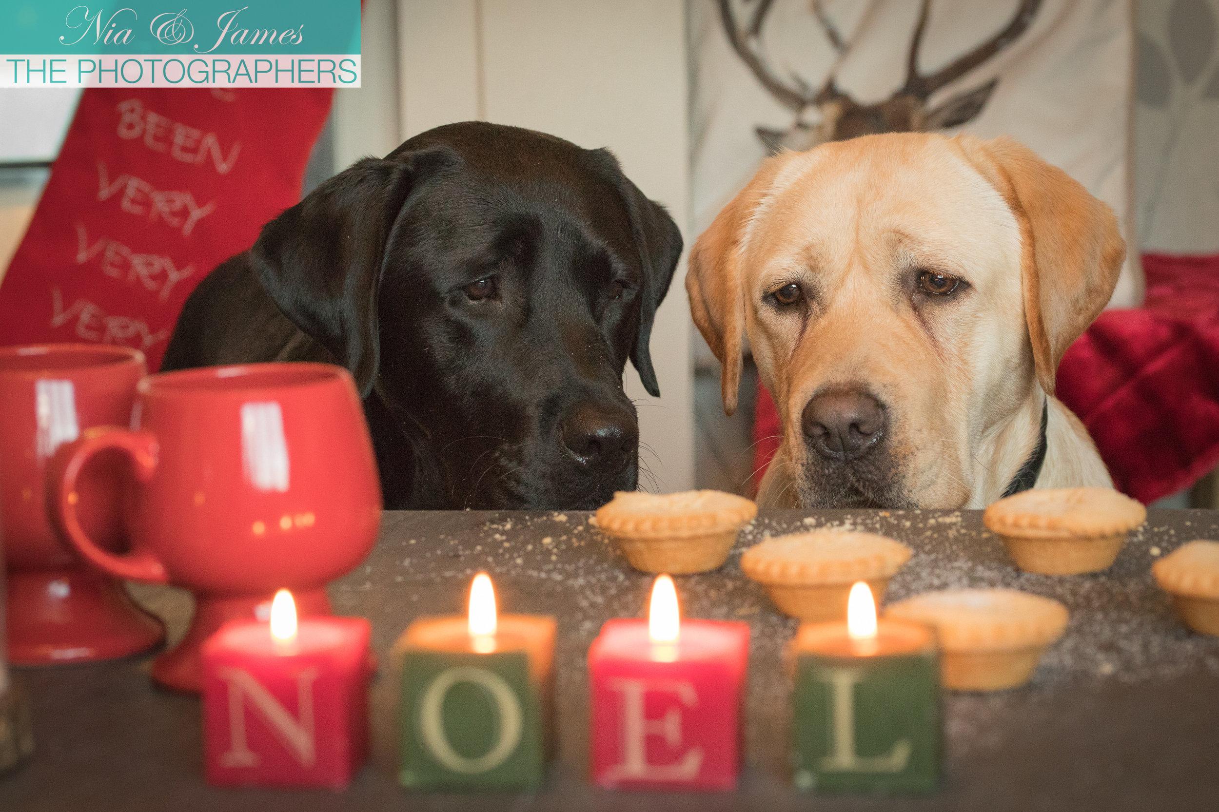 Nia & James The Photographers 2016 Christmas Card Design