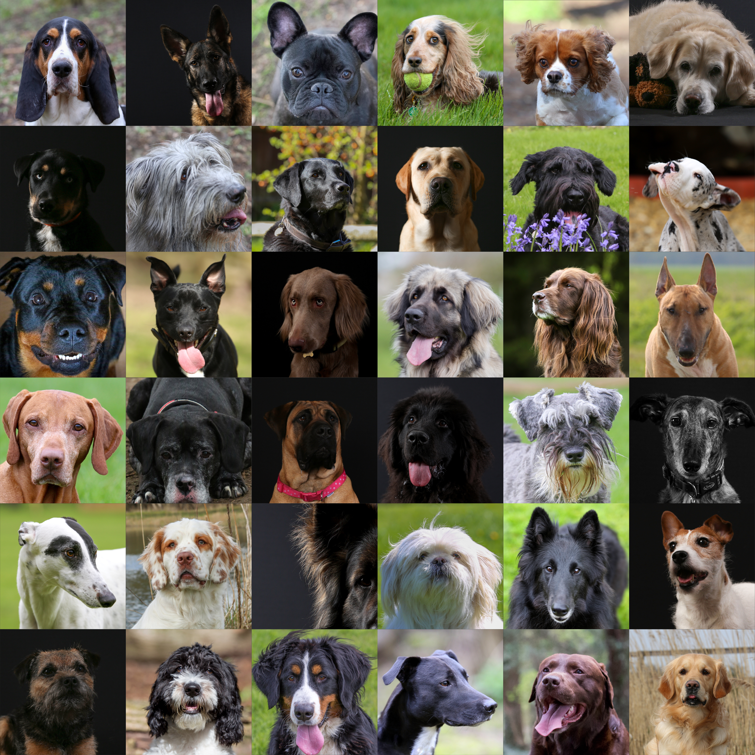 Some of the lovely dogs who participated in the 30 breeds charity fundraiser by Nia & James The Photographers