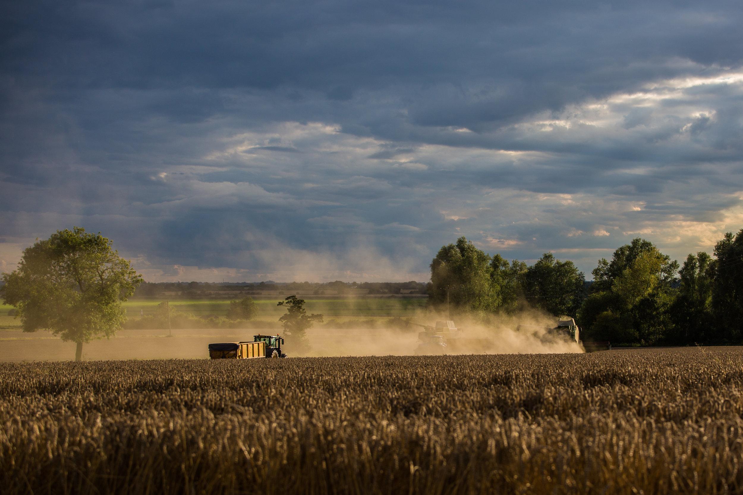 Harvest-5.jpg