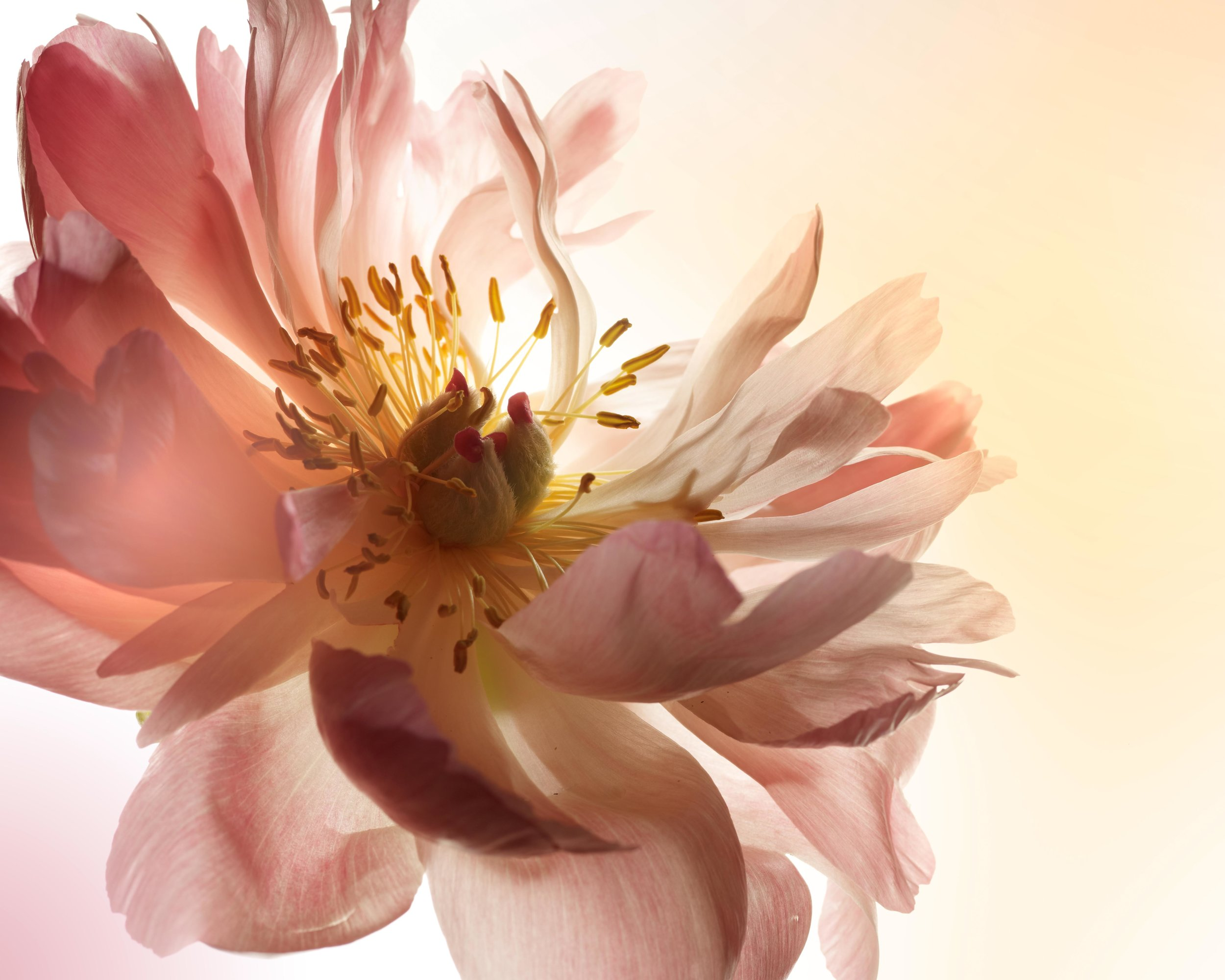 120229_SA_Flowers_01_053_Main_LAB.jpg