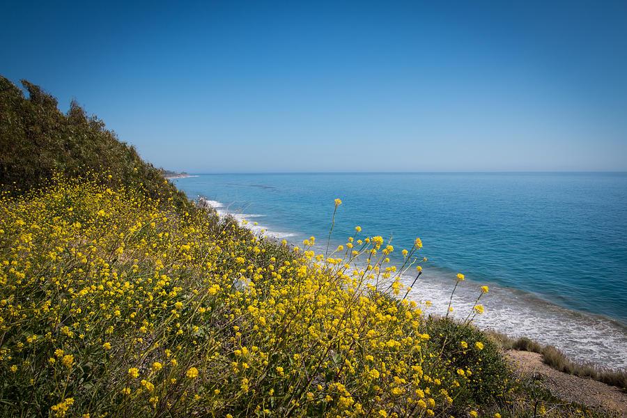 Santa Barbara Coastline :: Spring flowers