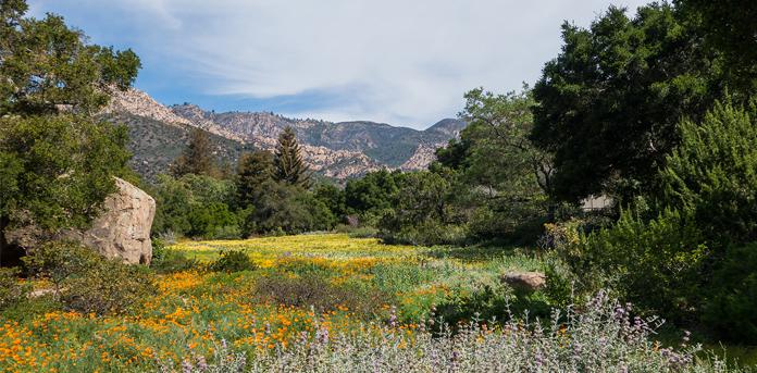 Botanic Gardens Meadow :: Spring