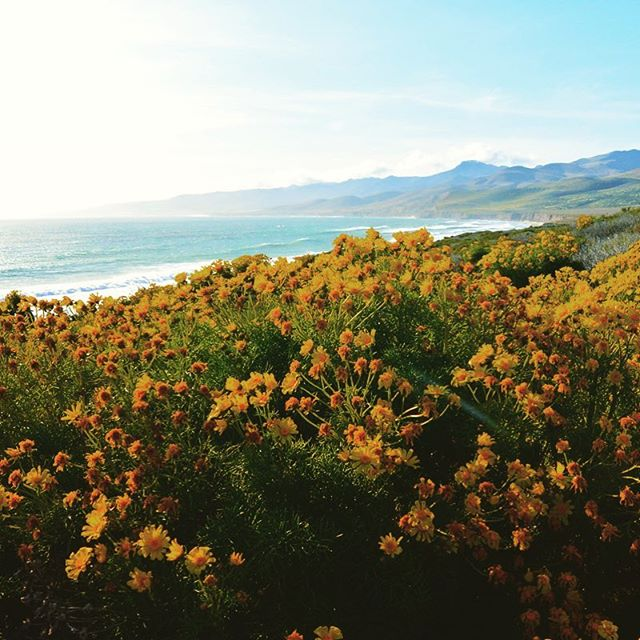 It's spring☀️, stop and smell the wildflowers 🌼🌷(they're a natural pesticide too, see profile for blog details)! . . . #spring #santabarbara #california #coast #claifornialife #pacificocean #wildflowers #beautiful #realtor #blog #blogger