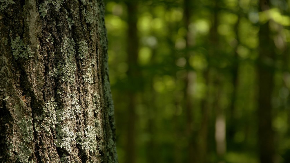Phil Collenette Tree Consultancy