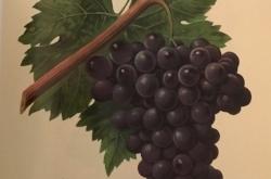 Red Wine Profile
