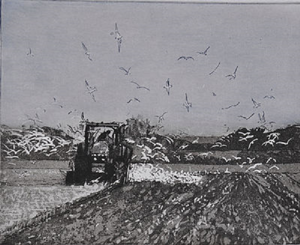 Following the Plough-  Framed£105.00   Unframed£78.00     Click here to buy this print    An etching - 34 cmx  38 cm  Edition 17/30