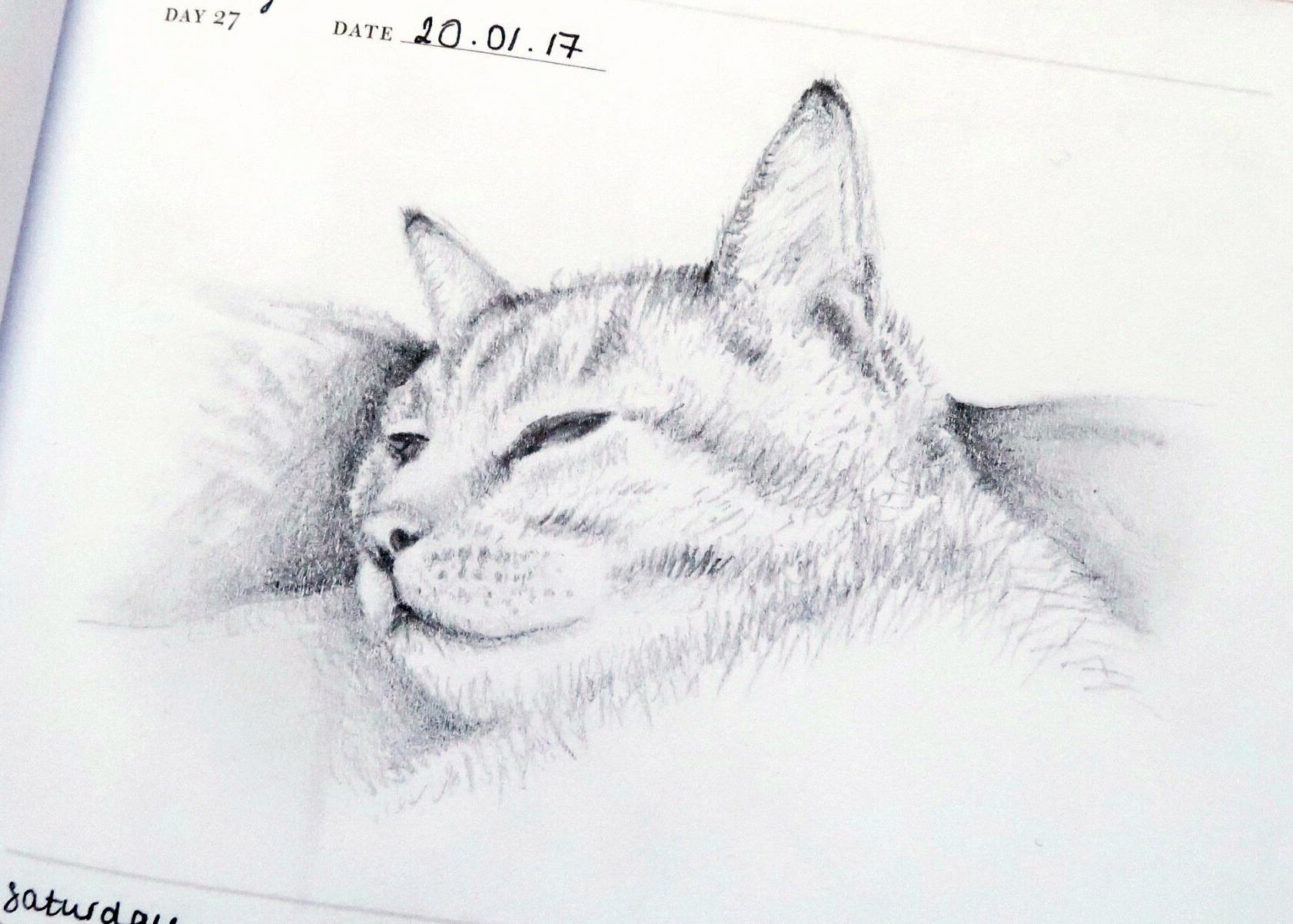 Millie Sketch Dark.jpg