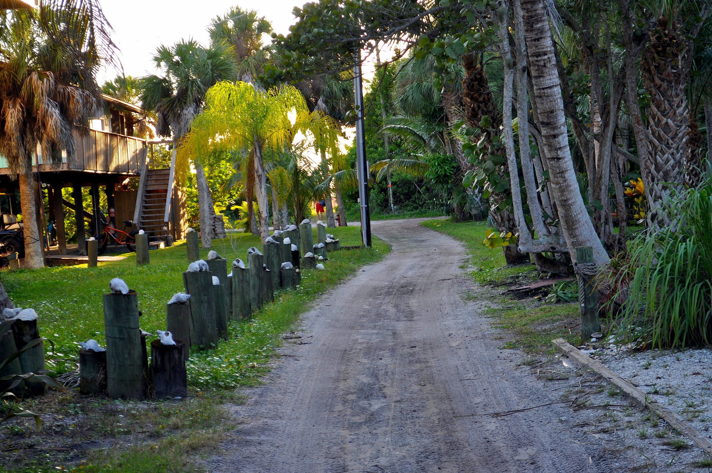 path to beach.JPG