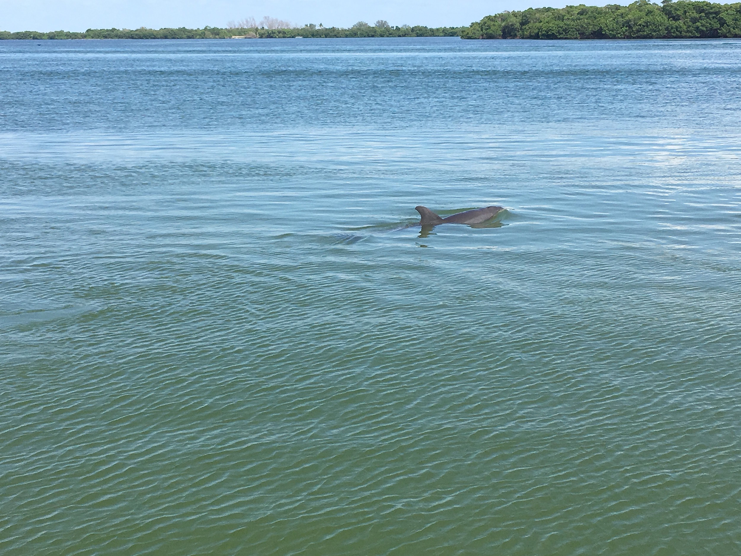 dolphin off of the dock.jpg