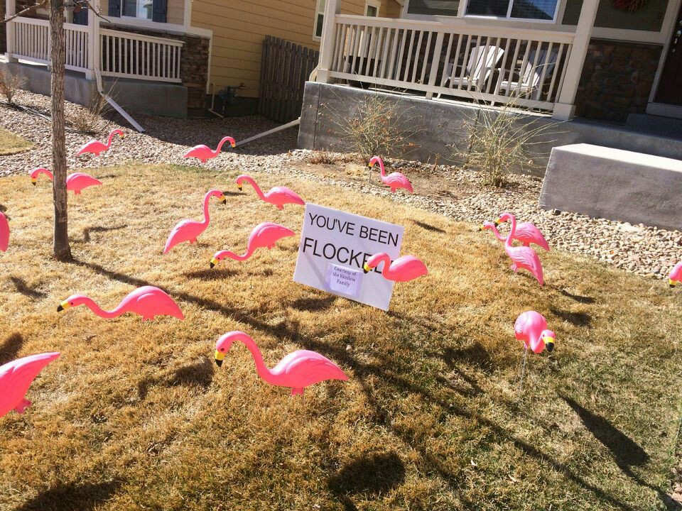 Photo Credit Cristian Litster -- flocking victim and fundraiser supporter