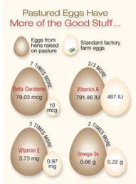 Pasture vs Standard Egg Part 1.jpg