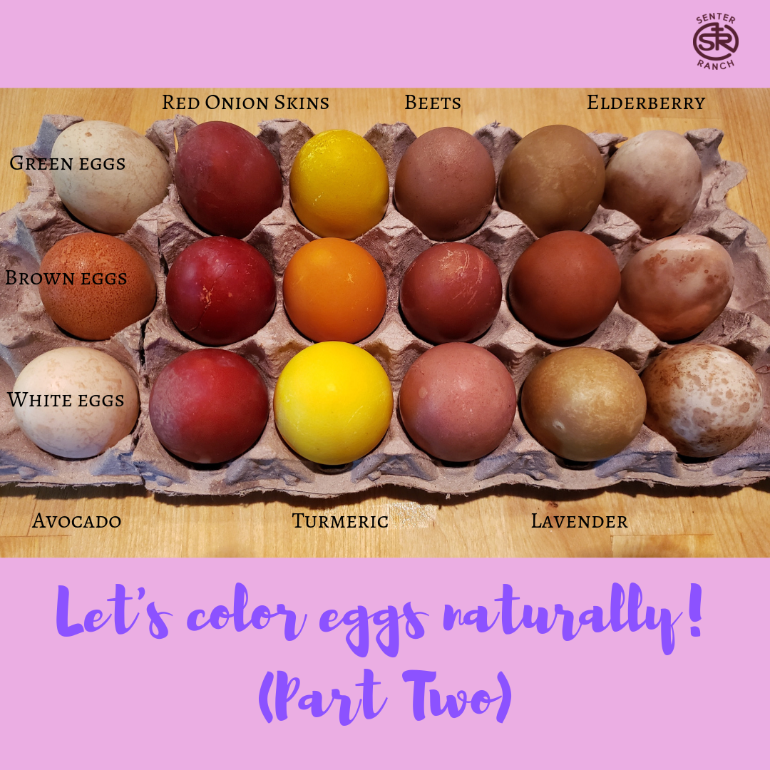 Let's color eggs naturally!Part 2.png