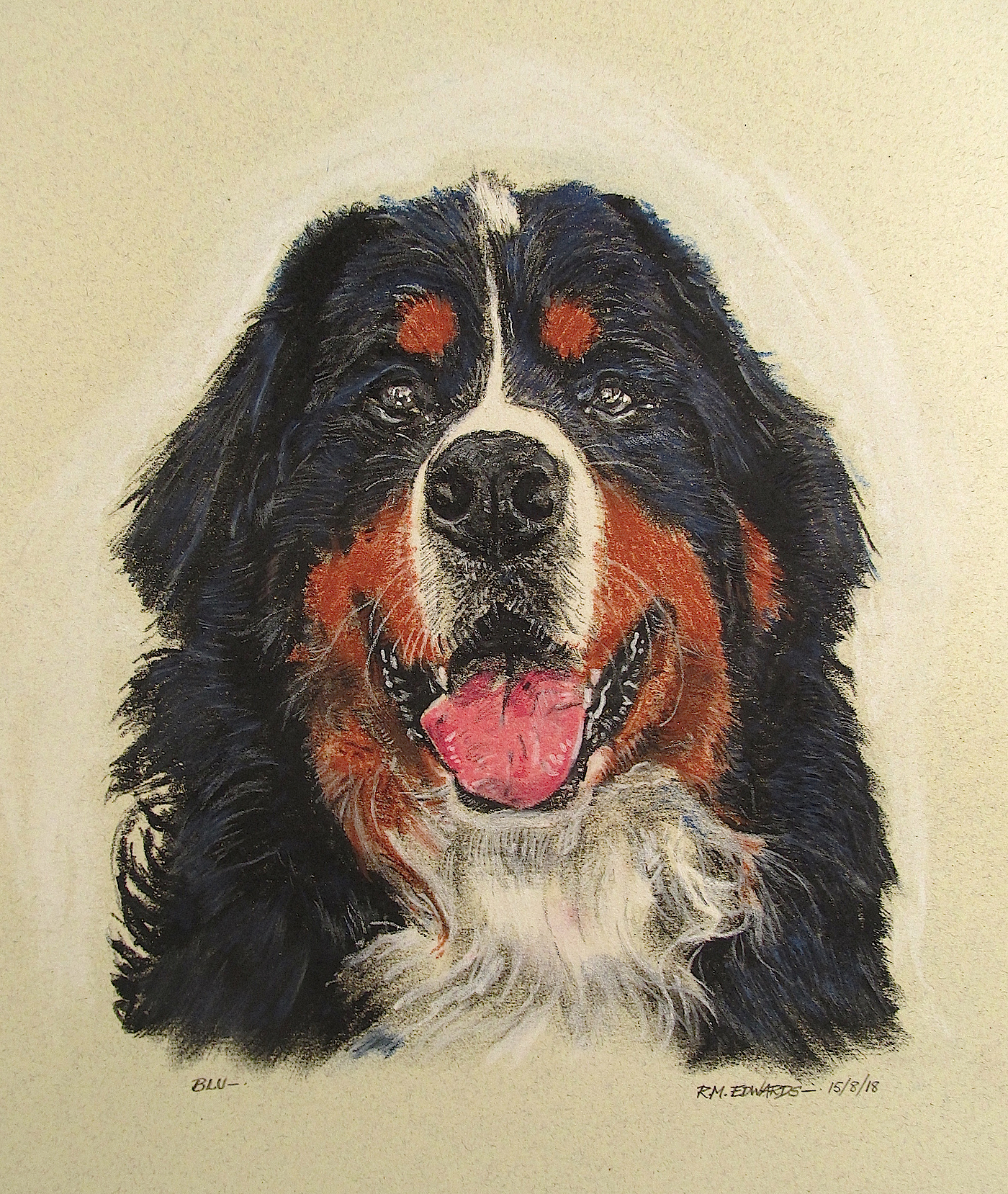 """Blu""; Bernese Mountain Dog"
