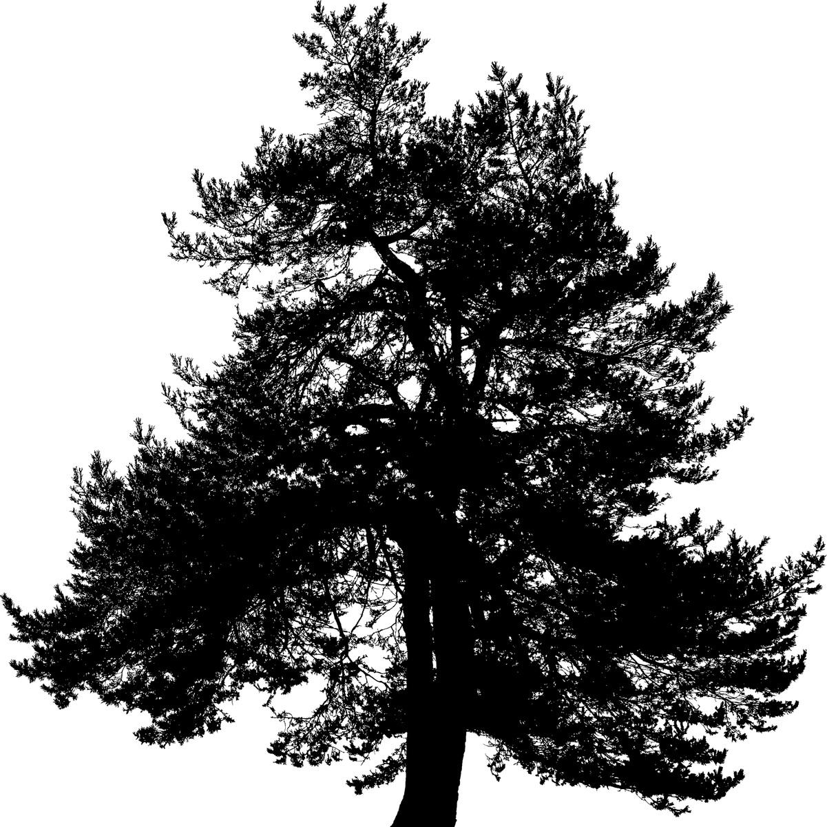 tree-4179484_1280.jpg