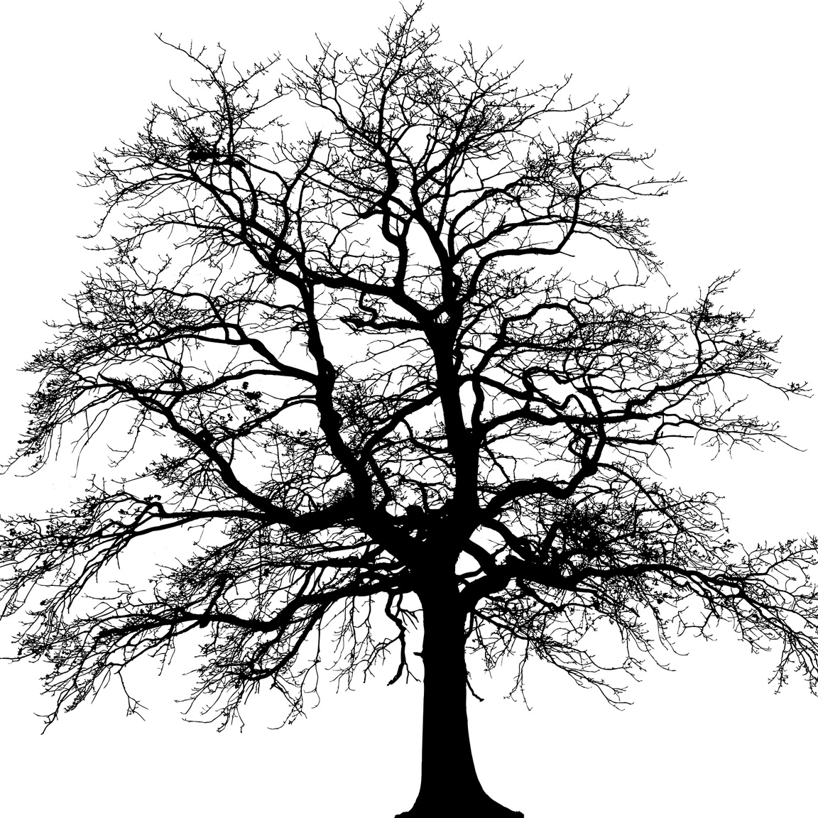 tree-3979965_1280.jpg