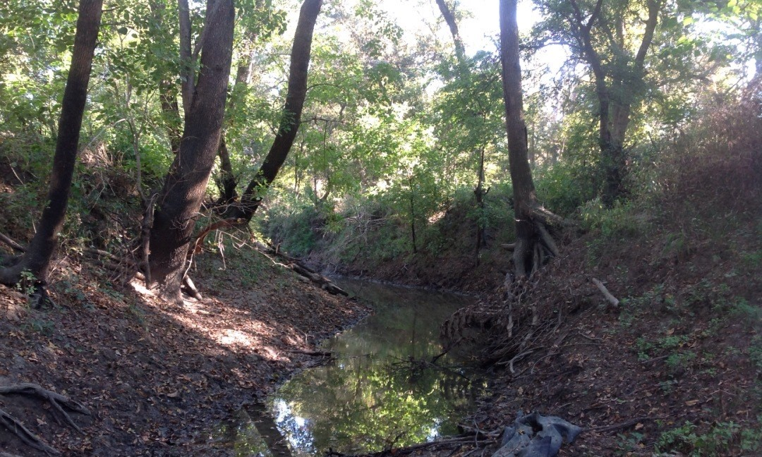 Example of healthy stream with riparian forest in Travis County. Photo credit: Tree Folks.