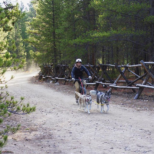 Bike rides are good for the soul. Had a lot of fun introducing newbies to the world of sleddogsports. These two are seasoned and fun to run #sleddog #drylandtraining #cmmcampout2018