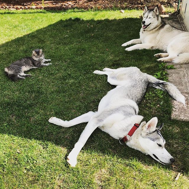 Grateful for moments of sun this summer #catsanddogs
