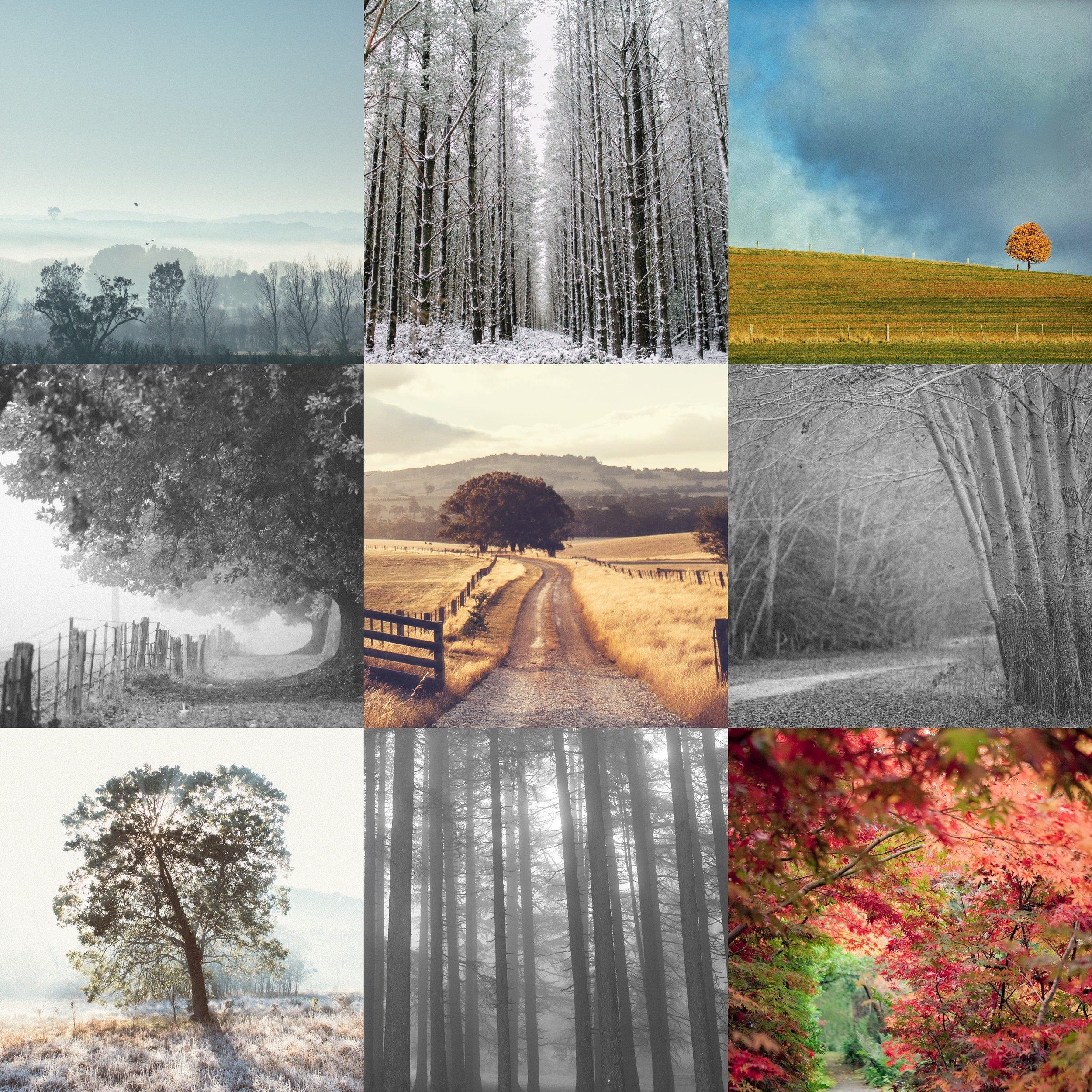 Macedon_Ranges_Photographer__0040.jpg