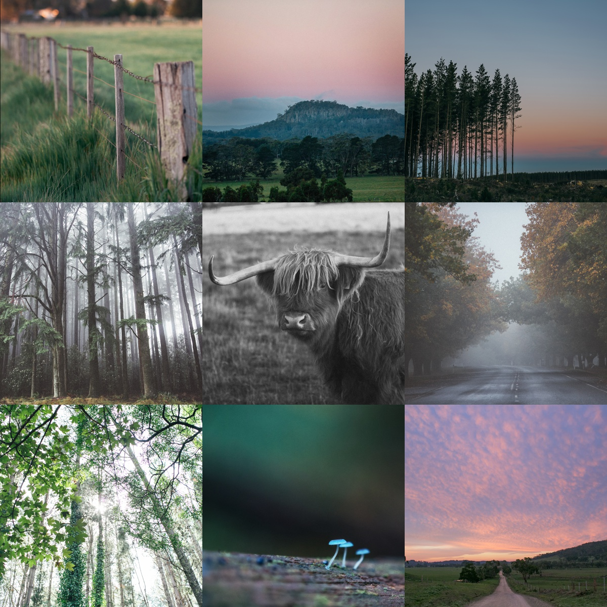 Macedon_Ranges_Photographer__0136.jpg