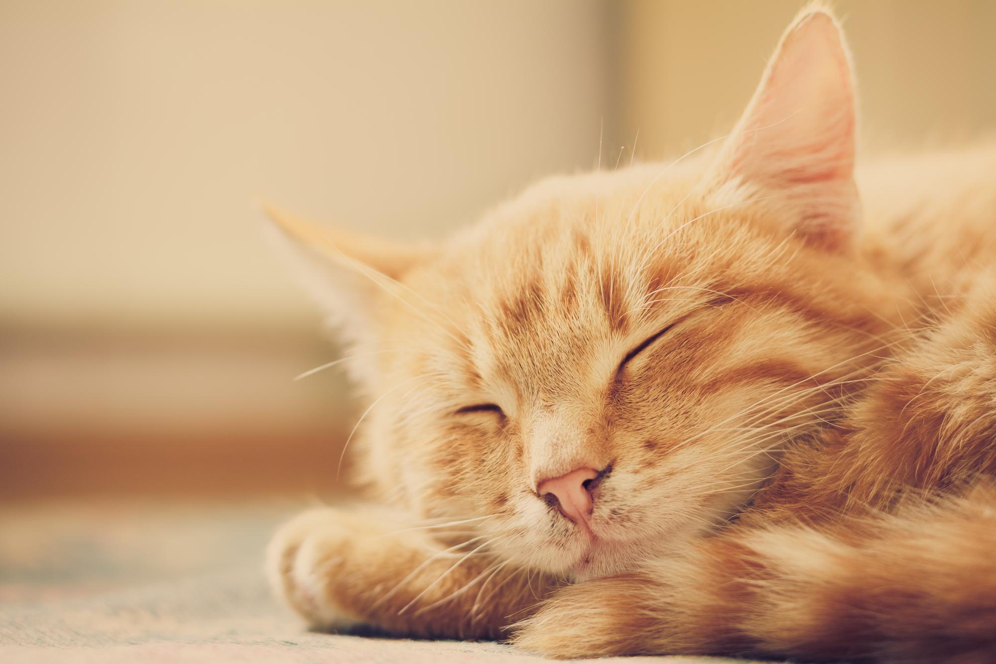 Ayurvedic Treatment_Veterinary for Cats.jpg
