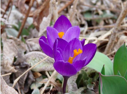 Ayurvedic Healing_Preparing for your spring cleanse