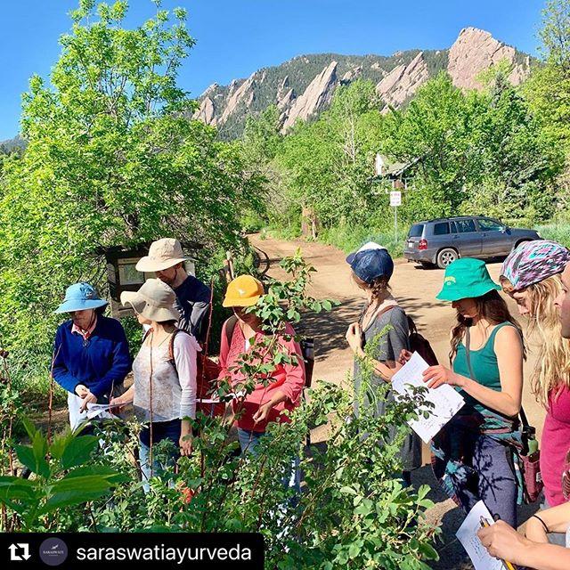 🌿 Alandi Ayurveda Gurukula Herb Walk 🌿 ⠀⠀⠀⠀⠀⠀⠀⠀⠀⠀⠀⠀ Thank you, Jane! ⠀⠀⠀⠀⠀⠀⠀⠀⠀⠀⠀⠀ 📷 #repost: @saraswatiayurveda ⠀⠀⠀⠀⠀⠀⠀⠀⠀⠀⠀⠀ #spring #alandi #ashram #boulder #colorado #botanicals #botany #healing #om #health #ayurveda #harmony #balance #nature #plants #naropa #herbs #herbalmedicine