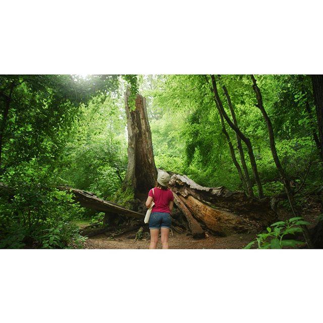 Altar of the Forest⠀ _______________________________________________________⠀ #forest_masters #stellar_shots #naturelovers #greettheoutdoors #cinematicphotography #earthfocus #cinebible #thecreatorclass #createcommune #liveoutdoors #travelingourplanet #thinkverylittle #ifyouleave #lensculture #onbooooooom #ig_onstandby #myfeatureshoot #forestpark #wanderfolk #milliondollarvisuals #peoplescreative #liveofadventure #liveoutdoors #keepexploring #folkgreen #davinciresolve #rsa_outdoors #earthpix #earthoutdoors #wilderness_culture